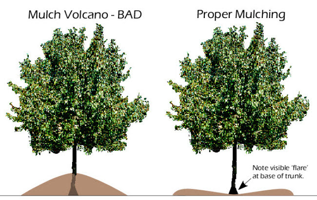 How to properly mulch your trees