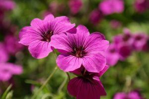 Bloom Blossom Flora