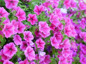 Excellent Flowering Plant Idea