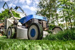 Garden Gardening Grass